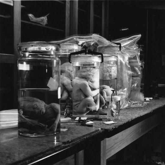 Table in Lab - Arne Svenson