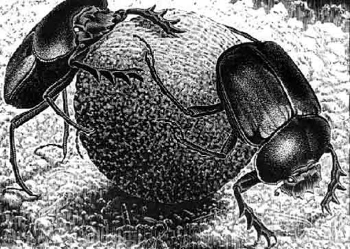 Maurits Cornelis Escher Scarabei / Scarabs, aprile 1935