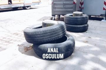 Anal Osculum x Artwort