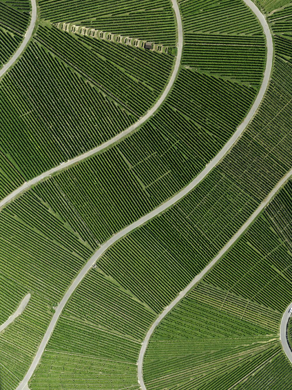 Vineyard Grün (Field 03 - Cultured Land) - Stephan Zirwes