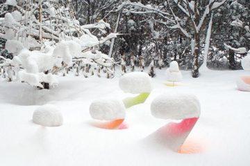 Toshihiko Shibuya / Snow Pallet